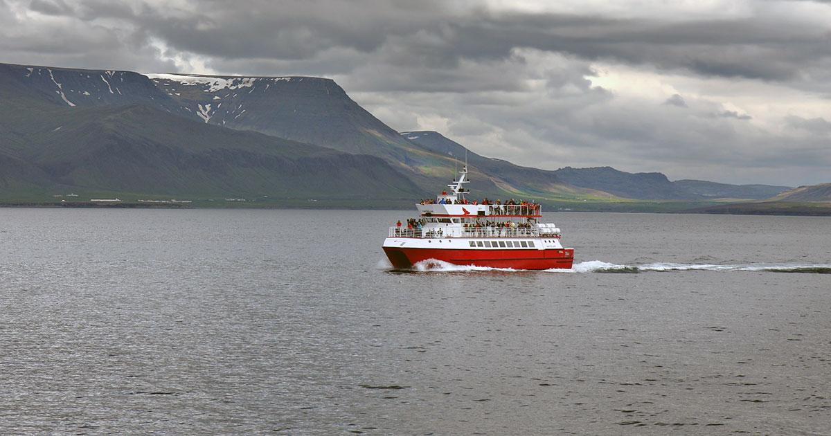 Valsafari i Reykjavik